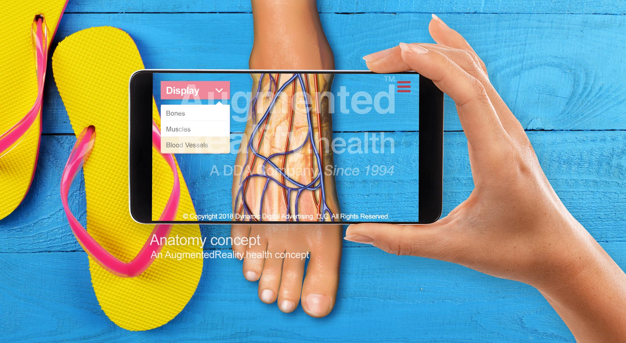 Anatomy Ar Augmented Reality Application Augmentedrealityhealth