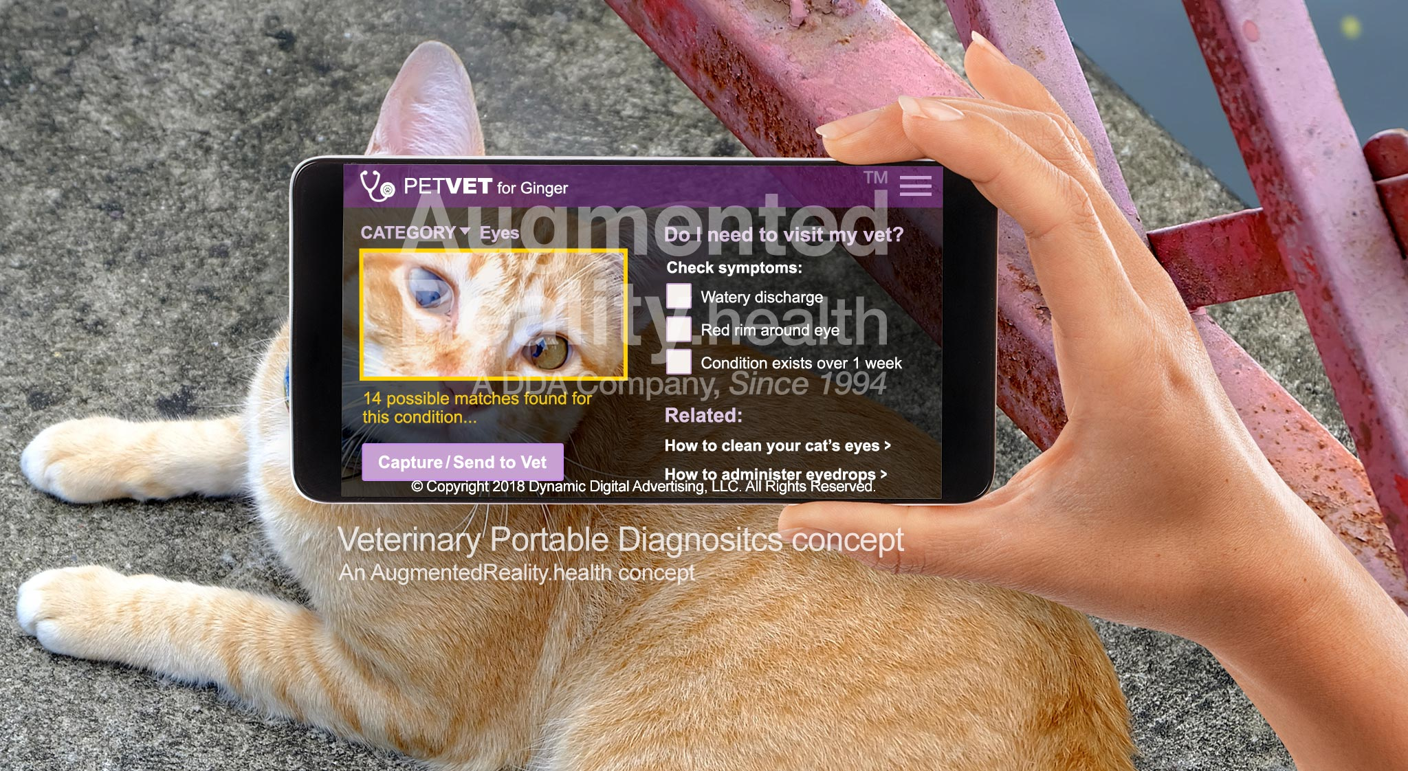 Veterinary Portable Diagnostics Augmented Reality Application